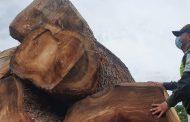 50.3 metros cúbicos de madera incautó la Polfa en el Cesar