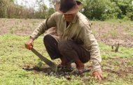 4 prácticas para impulsar el crecimiento y la productividad de los agricultores desde la industria, a propósito del Día del Campesino