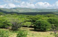 En Albania, Hatonuevo y Barrancas (La Guajira), plantarán más de 1.5 millones de árboles en los próximos 5 años