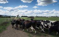 Colombia podrá exportar cálculos biliares bovinos a Paraguay
