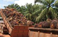 La ANSV promueve la movilidad vial laboral segura en el sector palmicultor