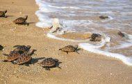 La articulación para combatir el tráfico y consumo de tortugas marinas en La Guajira