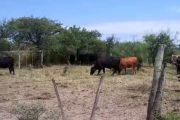 En La Guajira aseguran que se tienen identificados los ladrones de animales, pero no hay control