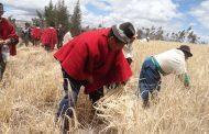 La FAO reivindica la sostenibilidad de los sistemas alimentarios indígenas