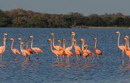 Así es el pacto para compartir datos y conocimiento sobre biodiversidad de La Guajira