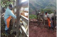 Colombia ha vacunado contra aftosa 26,3 millones de bovinos y bufalinos