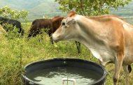 Areandina lanza programas de ganadería sostenible en alianza con Fedegan