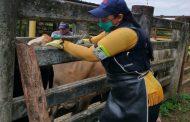 Ya van 28,1 millones de bovinos y bufalinos vacunados contra aftosa