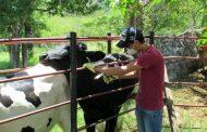 Minsalud trabaja en prevención de brucelosis