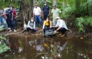 Liberan 1.000 tortugas hicoteas en el municipio de Dibulla (La Guajira)