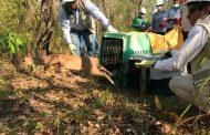 Más de 400 animales silvestres han sido liberados en el Cesar en 2021