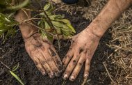 La asociación indígena Awavichor y Cerrejón sembrarán 27.000 plantas de bosque seco tropical en 2021