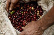 Gobierno entregó hoja de ruta, que asegura la sostenibilidad de la caficultura colombiana