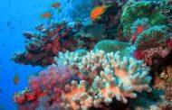 Cambio climático está matando arrecifes de coral mundiales mientras océanos se calientan: estudio