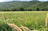 Corpoguajira exaltó declaratoria de la reserva privada de la sociedad civil Aguas Blancas – Santa Helena – Mushaisa